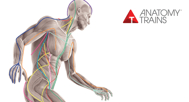 Anatomy Trains - Structure & Function